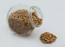 пшеница текстуры зерна конструкции предпосылки Стоковые Изображения RF