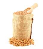 пшеница текстуры зерна конструкции предпосылки Стоковое Изображение