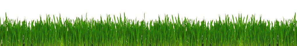 пшеница травы Стоковая Фотография RF