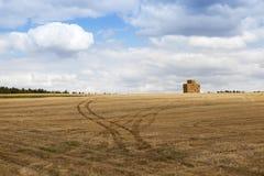 пшеница урожая зрелая Стоковые Фото