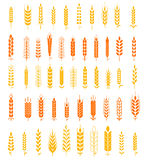 Пшеница Ух Значки и пшеница Natural Натурального продучта Компании Логотипа Устанавливать и Фермы Компании органическая, земледел Стоковое Изображение RF