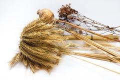 пшеница ушей зрелая Стоковые Фотографии RF