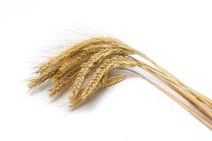 пшеница ушей зрелая Стоковые Фото
