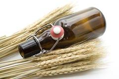 пшеница ушей коричневого цвета бутылки пива Стоковая Фотография