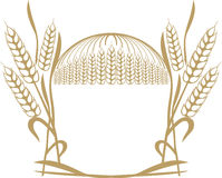 пшеница ушей состава Стоковые Изображения