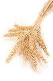 пшеница ушей Стоковые Изображения RF