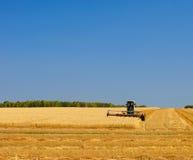 пшеница хлебоуборки поля Стоковое Изображение RF