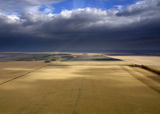 пшеница хлебоуборки Стоковое Изображение