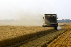 пшеница хлебоуборки Стоковая Фотография RF