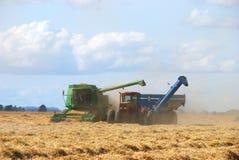 пшеница хлебоуборки Стоковые Фотографии RF