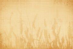 пшеница холстины Стоковая Фотография RF