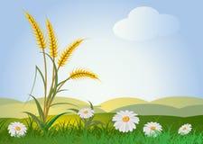 пшеница цветков ушей бесплатная иллюстрация