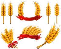 пшеница элементов конструкции собрания Стоковые Фото