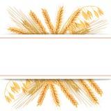 Пшеница, ячмень, овес и рожь комплект вектора значка 3d 4 зерна и уш хлопьев с едой текста наградной, натуральным продучтом стоковые изображения rf