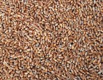 пшеница 07 Стоковое Фото