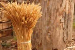 пшеница 2 пакетов Стоковое фото RF