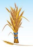 пшеница бесплатная иллюстрация
