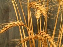 пшеница buqet стоковые фото
