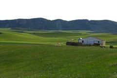 пшеница cultives Стоковое фото RF