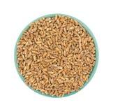 Пшеница Farro органическая в шаре на белой предпосылке стоковые изображения rf
