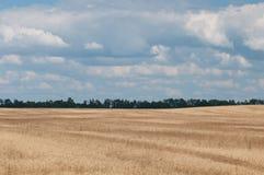 Пшеница landscape-2 стоковая фотография rf