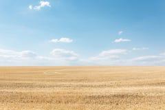 Пшеничное поле, взгляд ландшафта, солнечный день, много гектаров земли с пшеницей Стоковые Фото