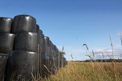 Пшеничное поле в Глене Clova стоковые изображения rf
