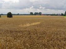 Пшеничное поле и дома в деревне Стоковое Изображение