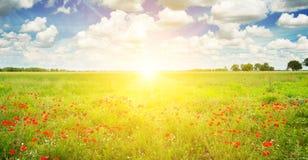 Пшеничное поле и яркий восход солнца на голубом небе Широкое фото стоковые фотографии rf