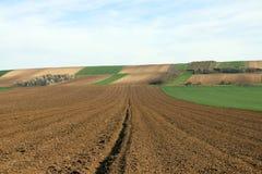 Пшеничное поле обрабатываемой земли вспаханное и зеленое Стоковые Фотографии RF