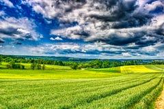 Пшеничное поле от Heimerdingen в rttemberg ¼ Баден WÃ с лесом на заднем плане стоковая фотография rf