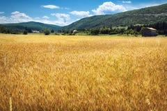 Пшеничное поле Provencial стоковое изображение