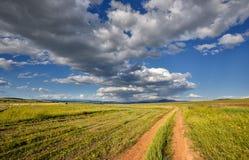 Пшеничное поле в лете Стоковые Изображения RF