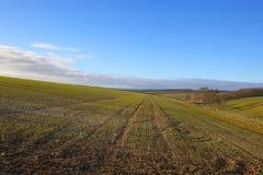 Пшеничное поле горного склона Стоковые Фото