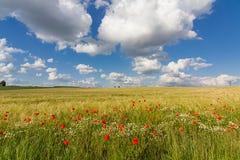 Пшеничное поле 2 границы мака Стоковое Фото