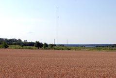 Пшеничное поле и антенна для клетчатого сообщения Стоковые Изображения RF