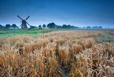 Пшеничное поле и ветрянка, Groningen, Голландия Стоковое Изображение RF