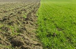 Пшеничное поле и вспаханная земля Стоковые Фотографии RF