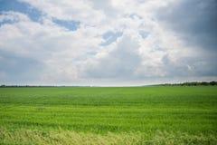 Пшеничное поле и облака ландшафта лета Стоковые Фото