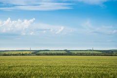 Пшеничное поле и облака ландшафта лета Стоковая Фотография RF