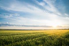 Пшеничное поле и облака ландшафта лета Стоковая Фотография