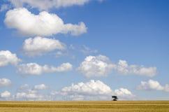 Пшеничное поле и облака Стоковые Изображения