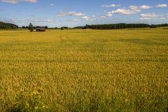 Пшеничное поле и ферма Стоковые Изображения