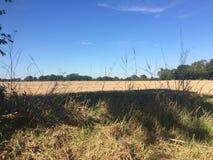 Пшеничное поле майной страны Стоковое Изображение RF