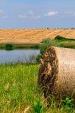 Пшеничное поле около озера стоковые изображения