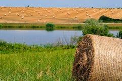 Пшеничное поле около озера стоковые фотографии rf