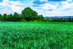 Пшеничное поле - сельский пейзаж Стоковое Изображение