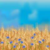 Пшеничное поле с цветками льна и голубым небом Стоковая Фотография