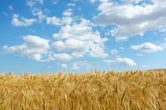 Пшеничное поле Стоковые Изображения