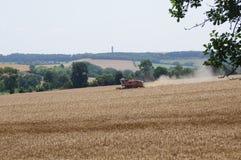 Пшеничное поле Стоковое Изображение RF